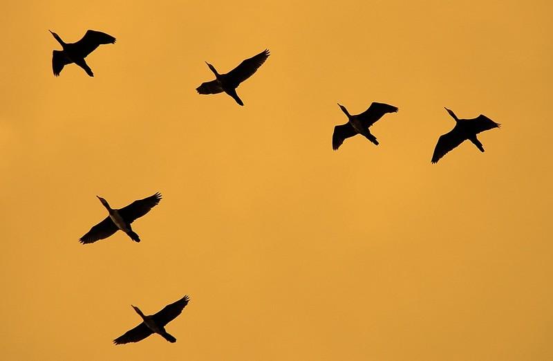 סיפור ליום השבת – 'ציפורים' מאת זהבה כלפה